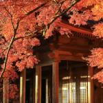 kyoto-autumn-000