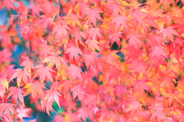kyoto-autumn-001