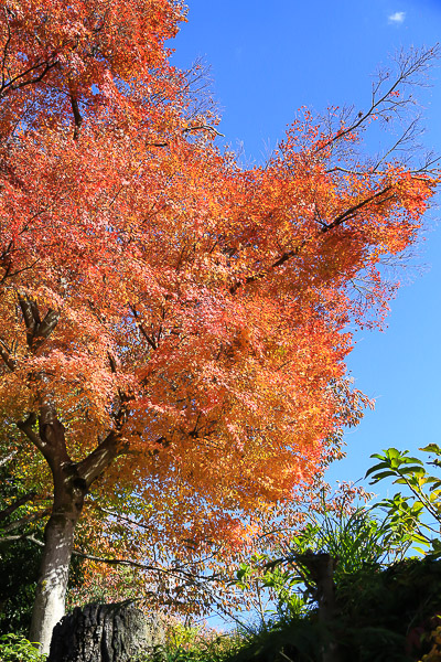 kyoto-autumn-002