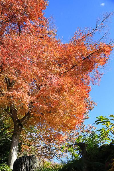 kyoto-autumn-002