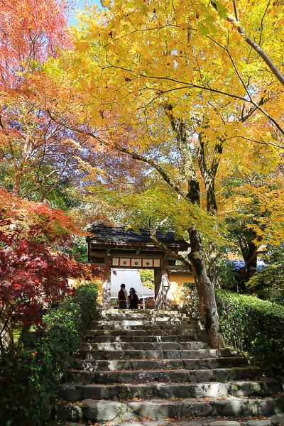 kyoto-autumn-003