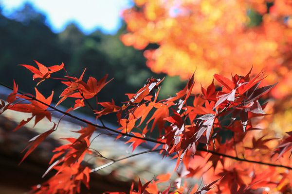 kyoto-autumn-005