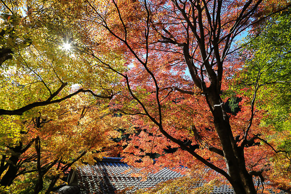 kyoto-autumn-007