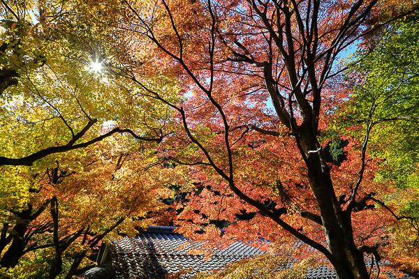 kyoto-autumn-007