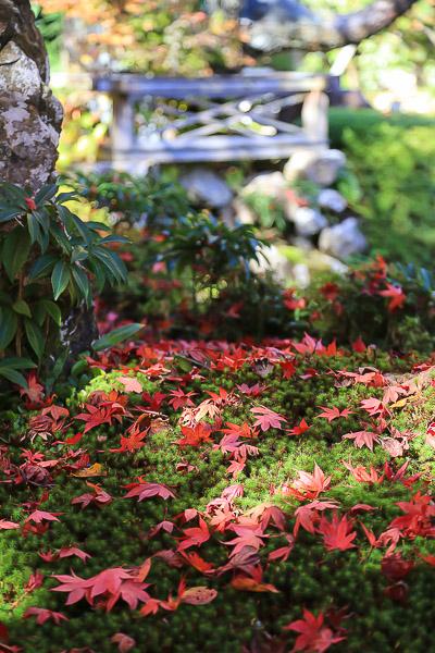 kyoto-autumn-008