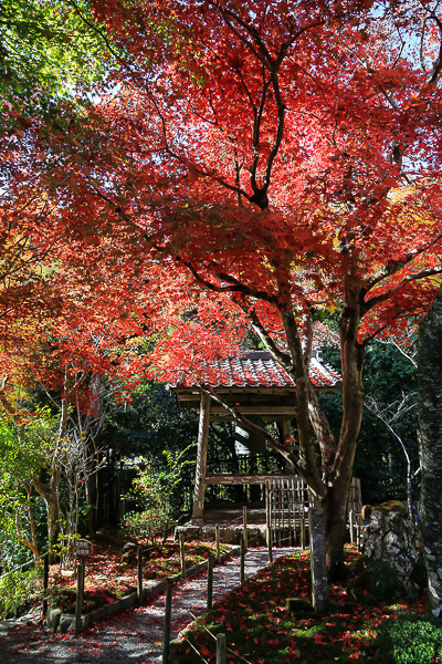kyoto-autumn-009
