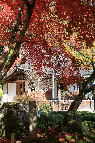 kyoto-autumn-011