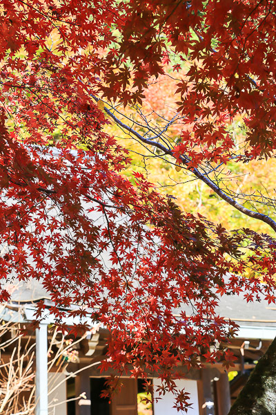 kyoto-autumn-012
