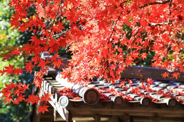 kyoto-autumn-013