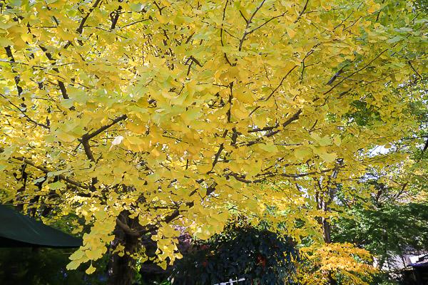 kyoto-autumn-014