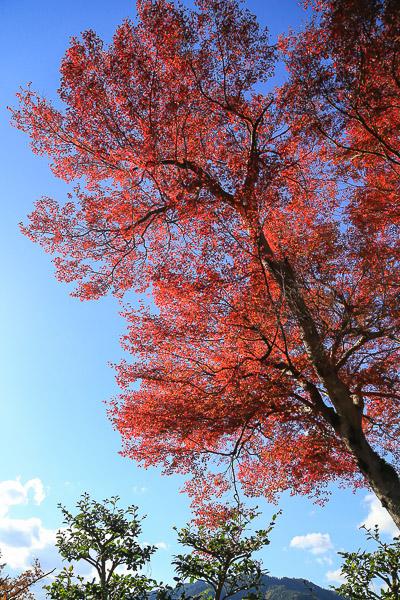 kyoto-autumn-015