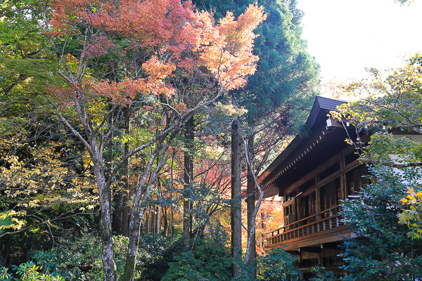 kyoto-autumn-016