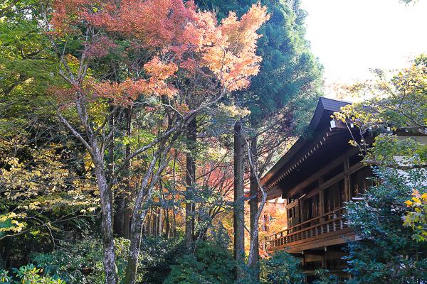 kyoto-autumn-016