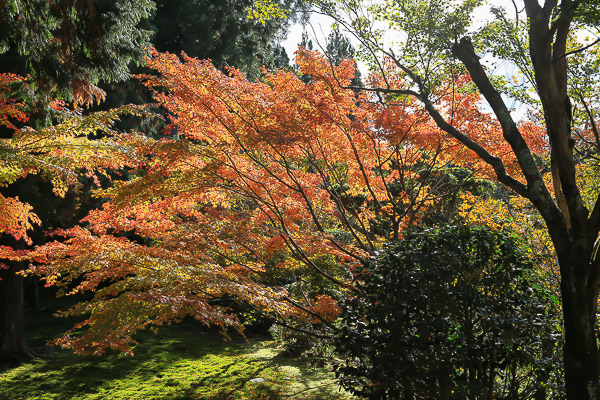kyoto-autumn-017