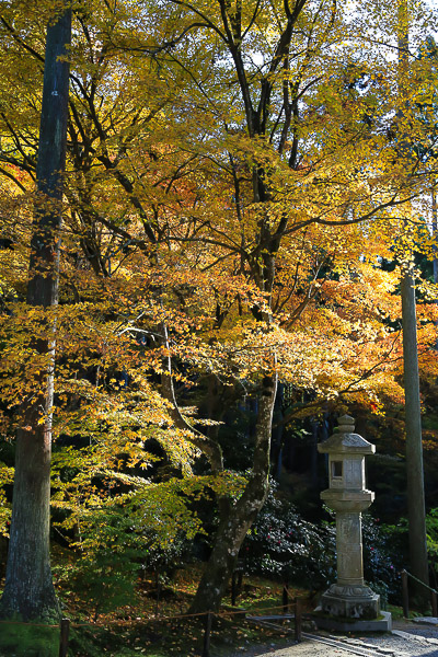 kyoto-autumn-020