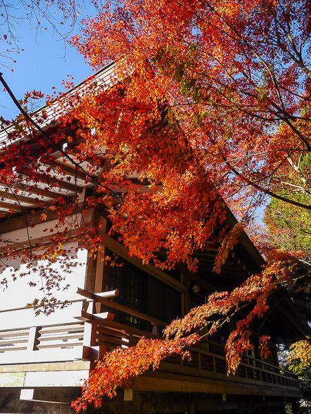 kyoto-autumn-021