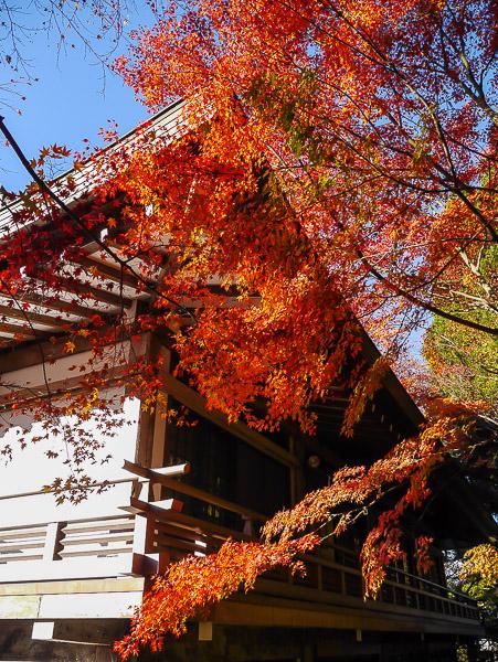 kyoto-autumn-021