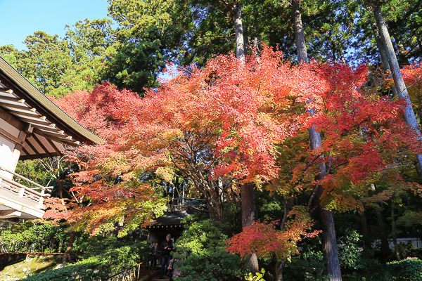 kyoto-autumn-022