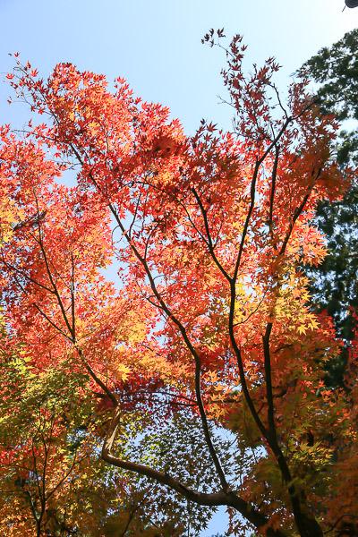 kyoto-autumn-023