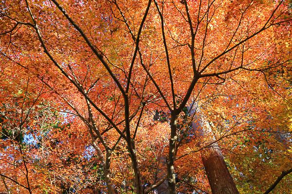 kyoto-autumn-024