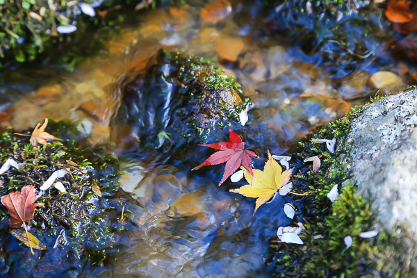 kyoto-autumn-026