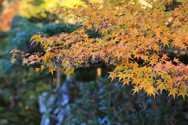 kyoto-autumn-027
