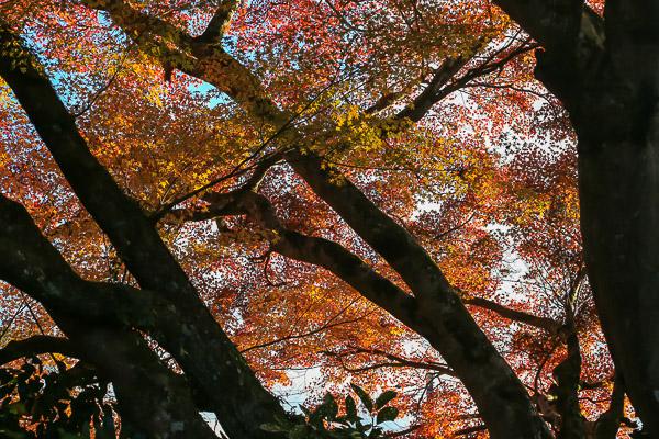 kyoto-autumn-028