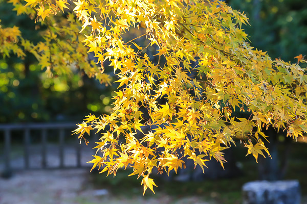 kyoto-autumn-029