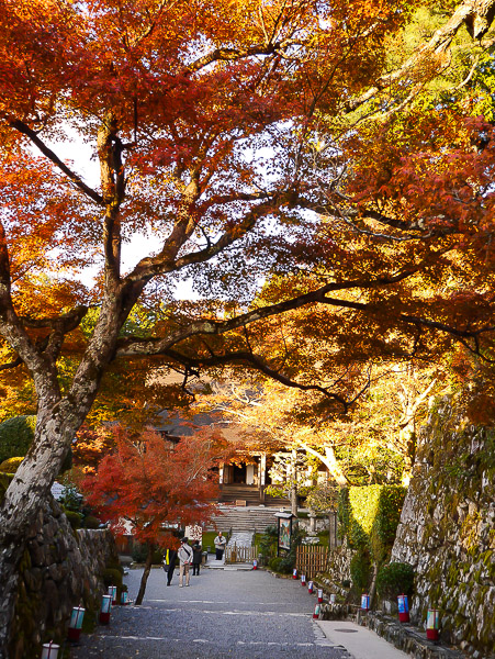 kyoto-autumn-032