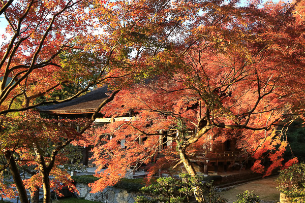 kyoto-autumn-034