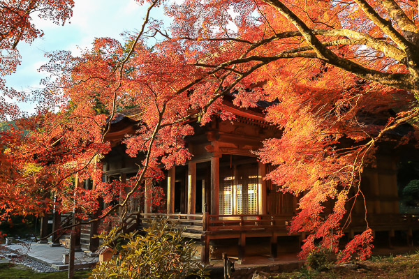 kyoto-autumn-035