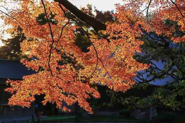 kyoto-autumn-036