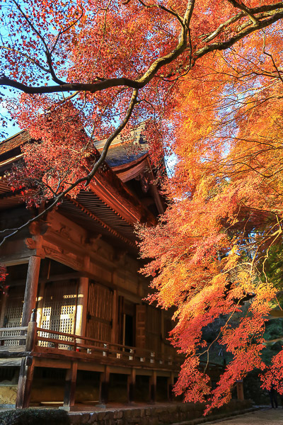 kyoto-autumn-037