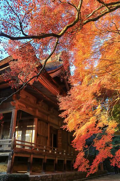 kyoto-autumn-037