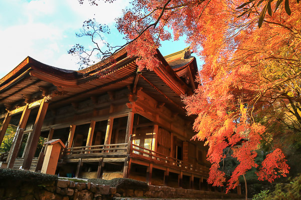 kyoto-autumn-038