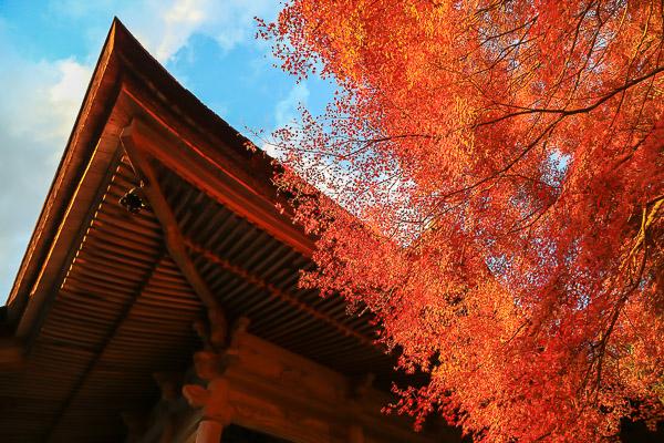 kyoto-autumn-039