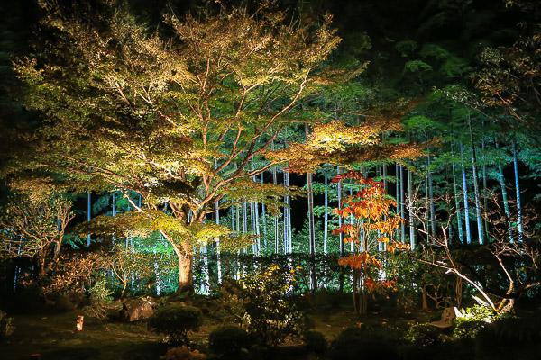 kyoto-autumn-041