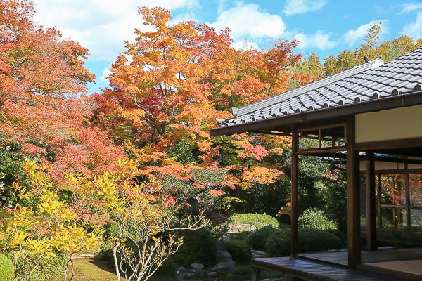 kyoto-autumn-050