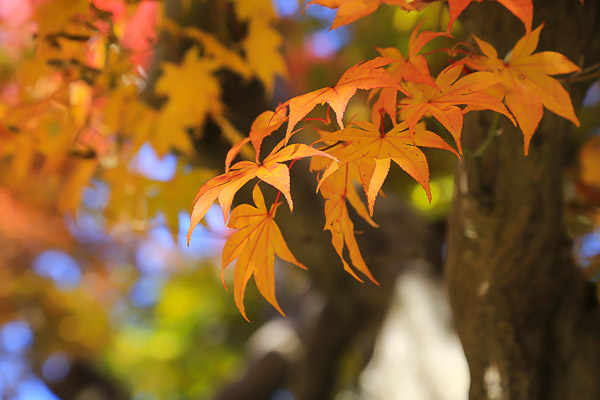 kyoto-autumn-051