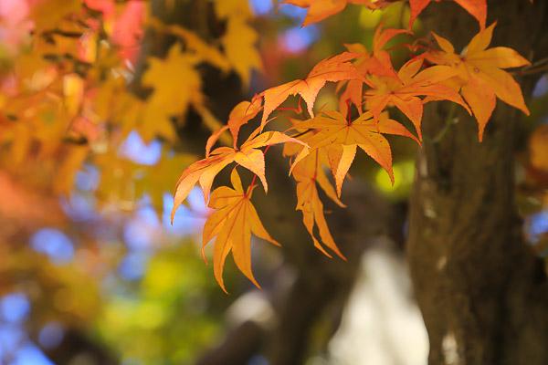 kyoto-autumn-051