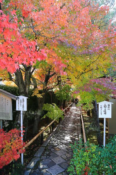 kyoto-autumn-053