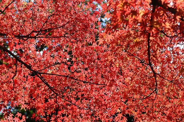 kyoto-autumn-054
