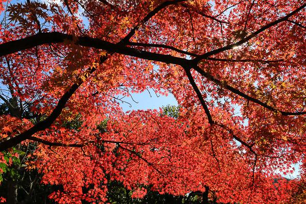 kyoto-autumn-055