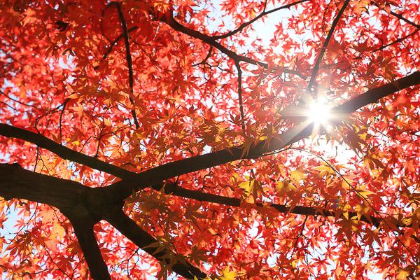 kyoto-autumn-056