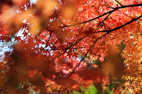 kyoto-autumn-057
