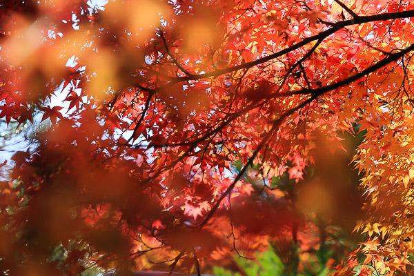 kyoto-autumn-057
