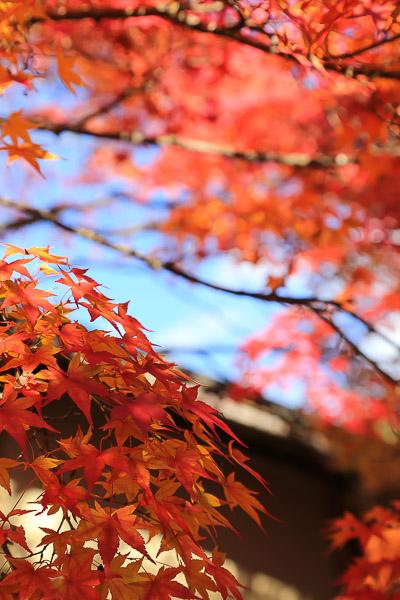 kyoto-autumn-058