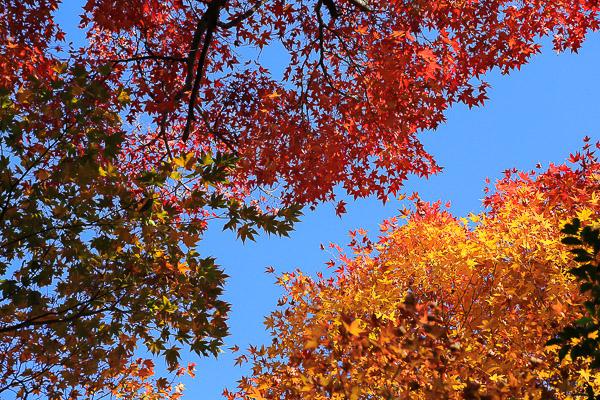 kyoto-autumn-061