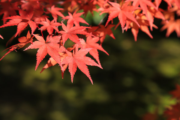 kyoto-autumn-062