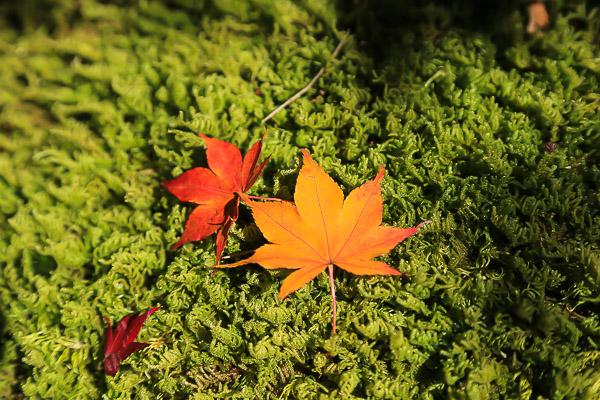 kyoto-autumn-064